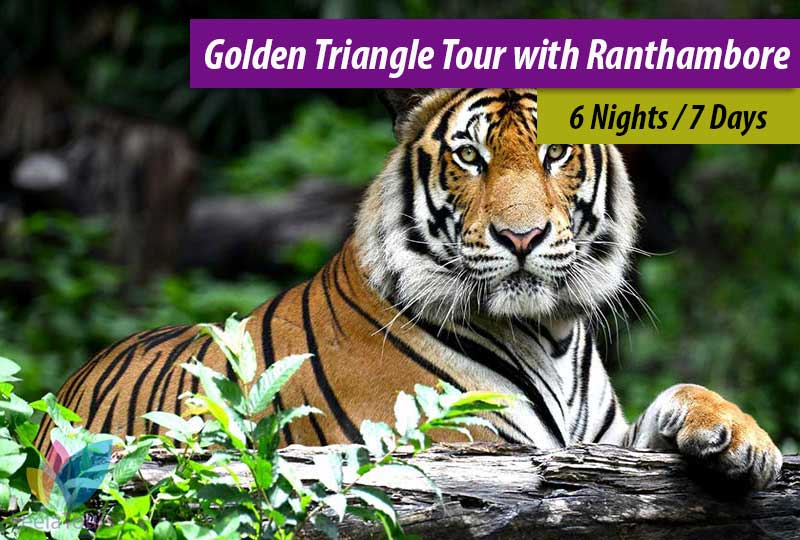 Golden Triangle Tour with Ranthambore Safari 6 Nights / 7 Days